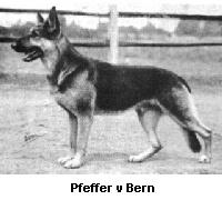Pfeffer von Bern